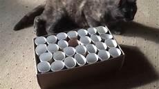 Diy Katzenspielzeug Selber Basteln