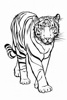 Malvorlagen Zum Ausdrucken Tiger Malvorlage Kostenlos Tiere Kostenlose Malvorlagen Ideen