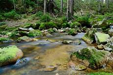 Gambar Indah Sungai Alam Foto Cepat Hutan Latar Menyimpan