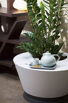 home plantes plant cosytime relax jardiner malin
