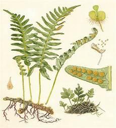 Intan Nirmala S Kingdom Plantae 1 Bryophyta Lumut