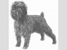 Affenpinscher Dog Breed Information
