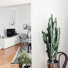 große pflanzen fürs wohnzimmer kaktus bilder ideen