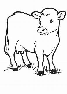 malvorlagen kuh zum ausdrucken coloring and malvorlagan