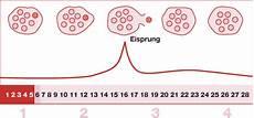 eisprung wann genau sind die fruchtbarentage immer gleich schwangerschaft
