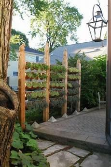 Die Besten 25 Sichtschutz Pflanzen Ideen Auf