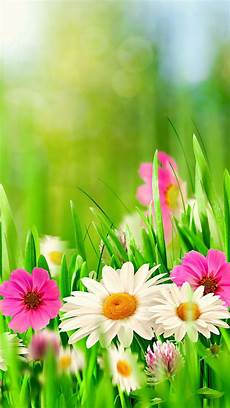 flower wallpaper for background flowers wallpaper 642289 supportive guru