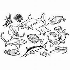 sea animals colouring in pages 17491 underwater animals drawing at getdrawings free