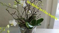 orchideen deko ideen diy orchidee im glas simpel einfach eintopfen