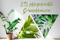 gehoelze fuer jede 25 pflegeleichte gr 252 npflanzen f 252 r jede wohnung