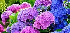 fiori di giugno eventi della tuscia 15 16 17 giugno 2018 bolsena