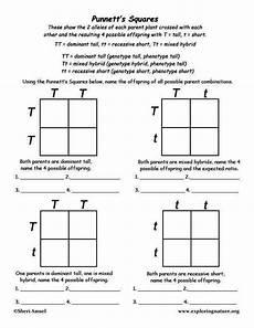 punnet square worksheet punnett square worksheet answers homeschooldressage com