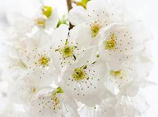 White Flowers Hd Images by 1000 Beautiful White Flowers Photos 183 Pexels 183 Free Stock