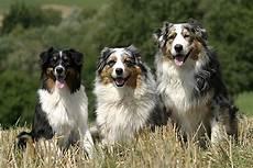 hunderassen mit bild hunderassen mit bild a bis z die tierexperten