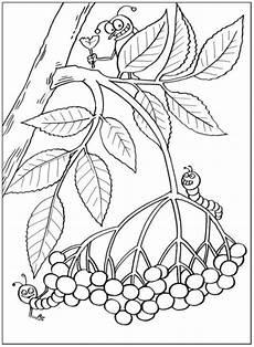 Ausmalbilder Pflanzen Blumen Ausmalbilder Zum Drucken Malvorlage Pflanzen Kostenlos 3