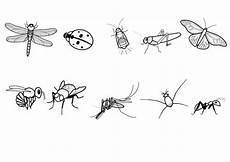 kostenlose malvorlage tiere insekten zum ausmalen zum