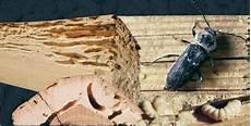 Traitement Des Bois Et Charpente Termites Merule