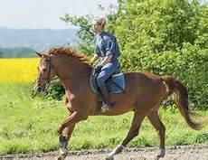 pferd wird auf dem weg nach hause immer schneller