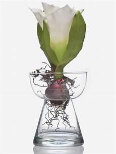Glasvase Amaryllis Hyazinthenglas Vase Glas Blumenvase