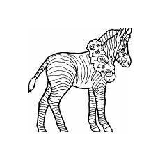 Bilder Zum Ausmalen Zebra Zebras Malvorlagen Zum Ausmalen F 252 R Kinder