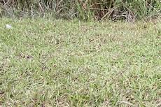 Verbrannter Rasen Wie Wird Er Wieder Gr 252 N