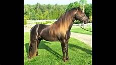 ausmalbilder pferde rassen 22 pferderassen