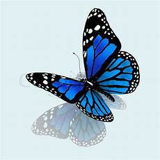 Butterflies Blue And Green Search 3d Butterfly