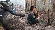 Viral Foto Ular Phyton Besar Akibat Kebakaran Hutan Hingga