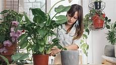 Zimmerpflanzen Filtern Die Luft Und Fangen Staub Ein