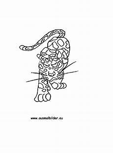 ausmalbilder jaguar ausdrucken ausmalbilder jaguar ausdrucken ausmalbilder