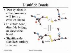 forms disulfide bonds ppt disulfide bonds powerpoint presentation id 165240