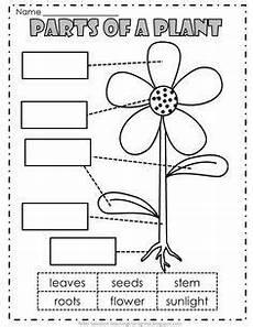 needs of plants worksheets kindergarten 13579 image result for parts of a plant worksheets printables ciencia de primer grado partes de la