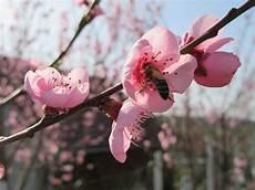 free images sky fruit flower petal bloom food