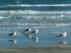 Seagull Apartments Ks by Port Aransas Tx Seagulls On The Photo Picture