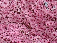 sfondi fiore goodvalley fiorire