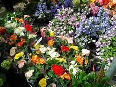dei fiori lina montan una guida turistica con voi festa dei fiori