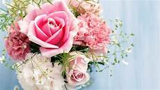 Gambar Bunga Mawar Pink Dalam Rangkaian Mawar Pink