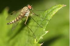 warum summen mücken kinderfragen nabu baden w 252 rttemberg