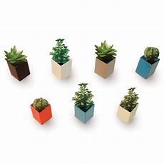 The Wall Mini Flower Pots