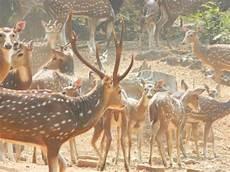 so many deer yes deer is the plural form of deer