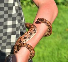 Gambar Henna Di Tangan Dan Kaki Balehenna
