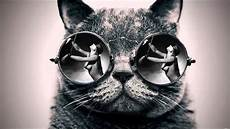 Cat S Glasses