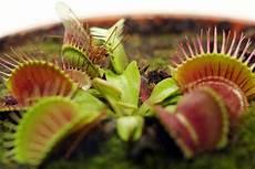 fleischfressende pflanzen 187 repr 228 sentative arten