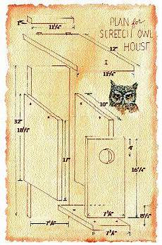 screech owl house plans screech owl box plans from audubon socienty apparently