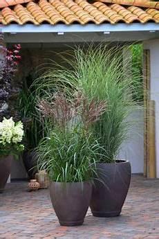 gräser für kübel die besten 25 pflanzenk 252 bel ideen auf diy pflanzer outdoor pflanzk 252 bel und