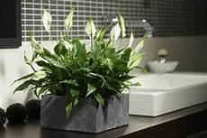 die besten pflanzen f 252 rs badezimmer garten pflanzen
