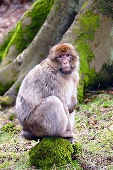 64 Gambar Lucu Binatang Monyet Hd Gambar Pixabay