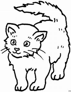suesse junge katze ausmalbild malvorlage tiere