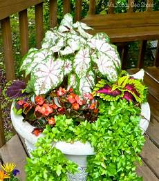 Easy Container Gardens