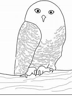 Eule Hedwig Malvorlage Eule Hedwig Malvorlage X13 Ein Bild Zeichnen
